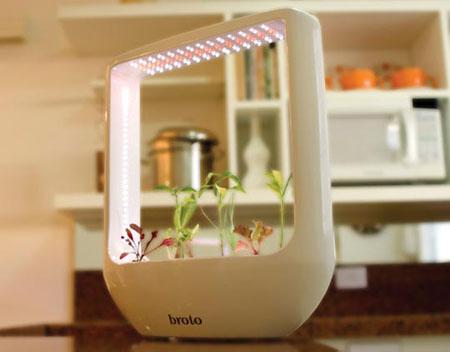 broto pot plant