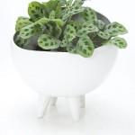 Ceramic Flower Pot: The Elegant Way To Showcase Your Plants